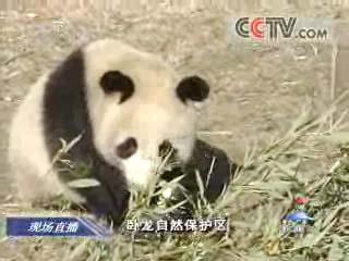电视截图-赠台大熊猫专家组推荐三组合 结果择日宣布