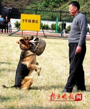 南京选美组图犬举行v组图主人宠物抢风头(美女舞dj热美女视频图片