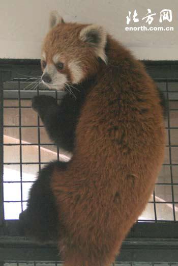 动物园春季防疫开始 打针吓坏小动物(图)-防疫-北方