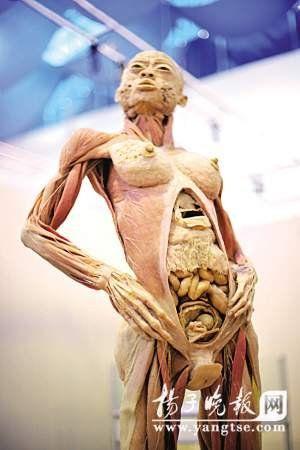 南京展出16具完整人体标本 血管神经都可见(图