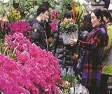 線上線下相結合 市民春節享受『花』樣生活